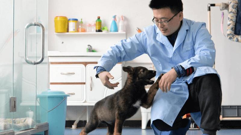 Primer perro clonado en China comienza a entrenar en base policial